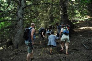 Activitat de seguiment de l'ós bru (Ursus arctos) Parc Natural de l'Alt Pirineu