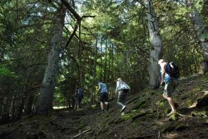 Activitat de seguiment de l'ós bru  (Ursus arctos)  al Parc Natural de l'Alt Pirineu