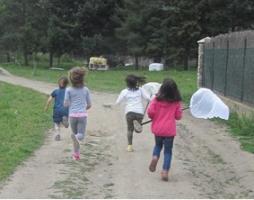 Activitat de papallones diürnes